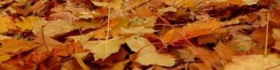 jesienne liście na ziemi