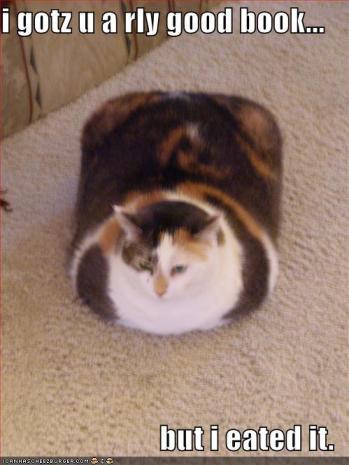kwadratowy kot