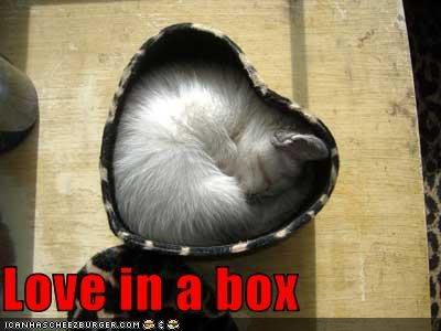 walentynkowy kotek (w pudełku-sercu)