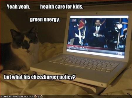 kot przy laptopie