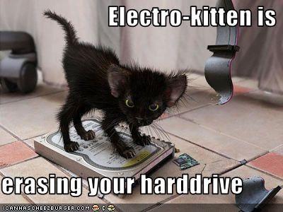 czarny elektro-kotek, lolcat