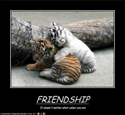 tygryski, przyjaźń