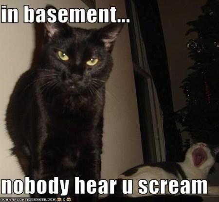 czarny kot z groźną miną, foto