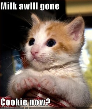maly kotek, rudy