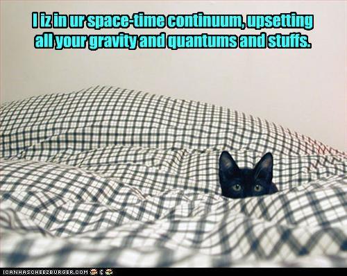 czarny kot w pościeli