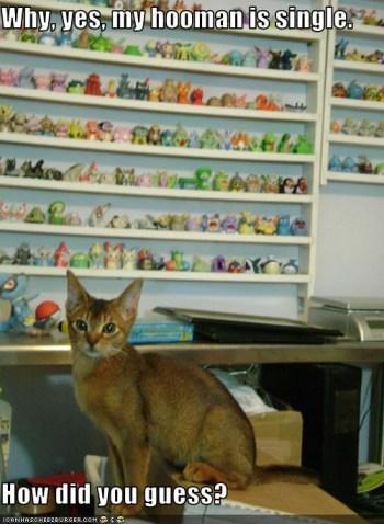 kot przy półce z maskotkami
