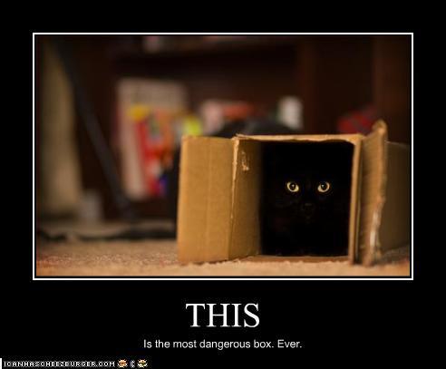 czarny-kot_w_pudelku