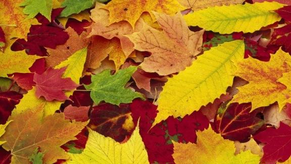 kolorowe jesienne liście, foto