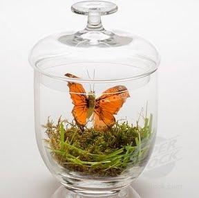 belljar-szklany-klosz