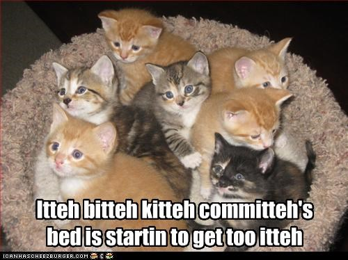 male kotki