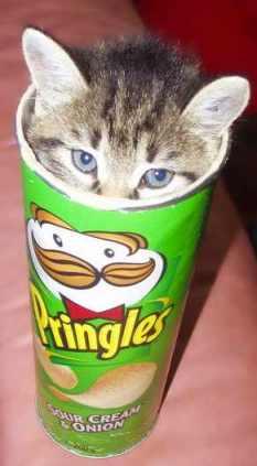 Kot w tubie Pringles