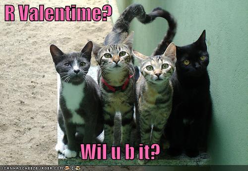 Koty, Walentynkowe serce z ogonów