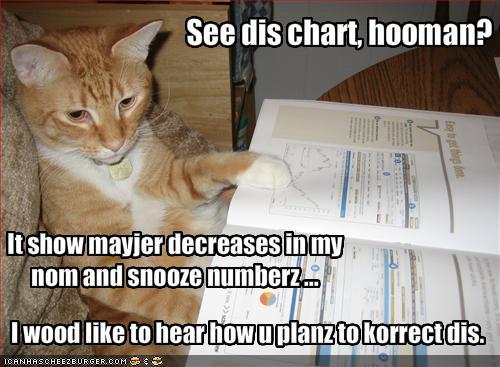 Kot i kryzys
