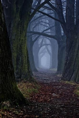 Ścieżka w niebieskim lesie