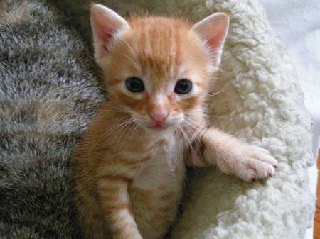 Mały rudy kotek