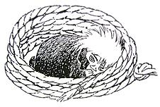 Muminki, Homek Toft, Ilustracja z książki