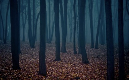 Niebieski las i brązowe liście