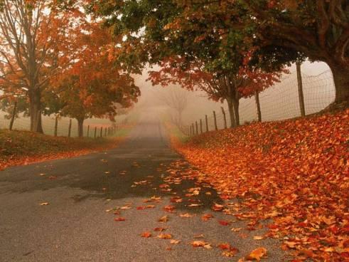 jesień, czerwone liście, droga