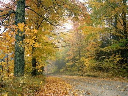 jesien, las, droga, fotografia