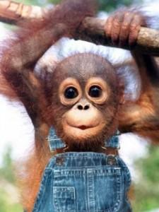 małpka w spodniach