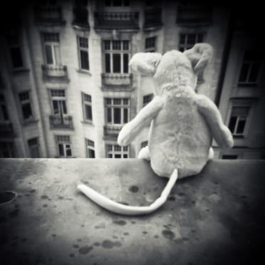 śmierć tomasza beksińskiego, pluszak na parapecie okna