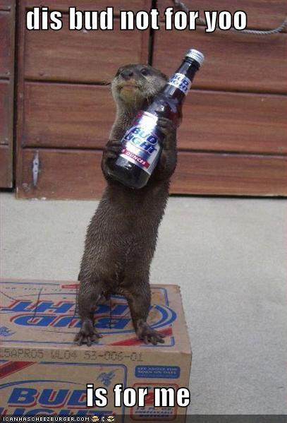 chytra baba z Ameryki, chytra-baba-z-radomia, wydra zabiera piwo, lolcat, mem