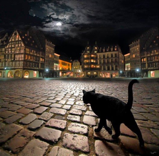 czarny kot i miasto nocą, Halloween
