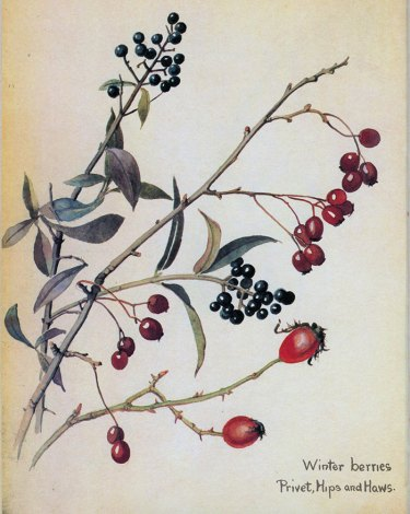 01Winterberries7