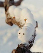 Śnieżna dżdżownica