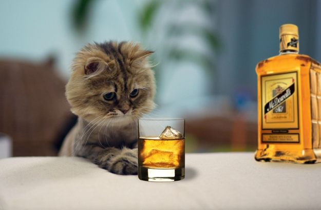 kot_i_alkohol