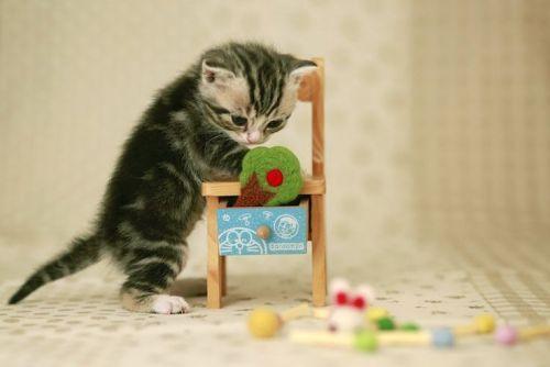 maly kotek i krzeselko