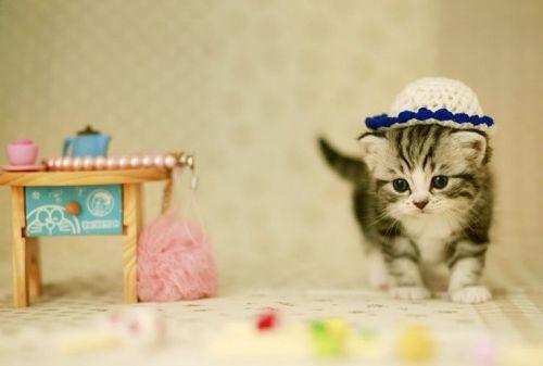 maly kotek w czapce