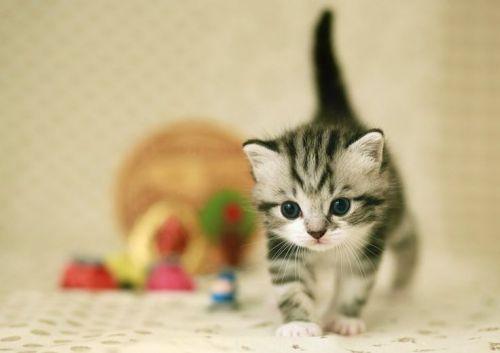 maly kotek