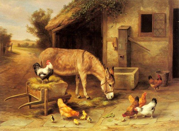 osioł i kurczaki