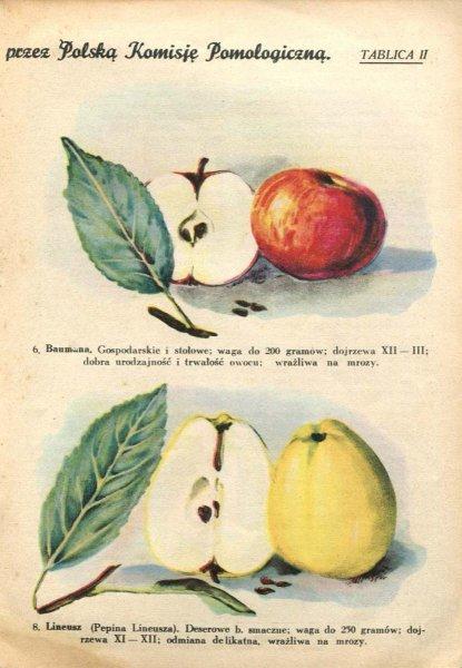 plon-jablko