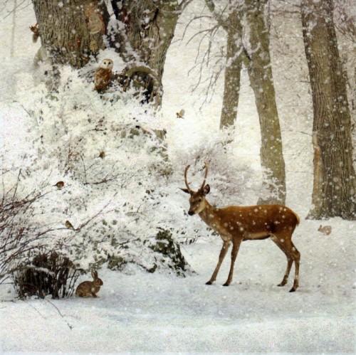 zima-zwierzeta-swieta